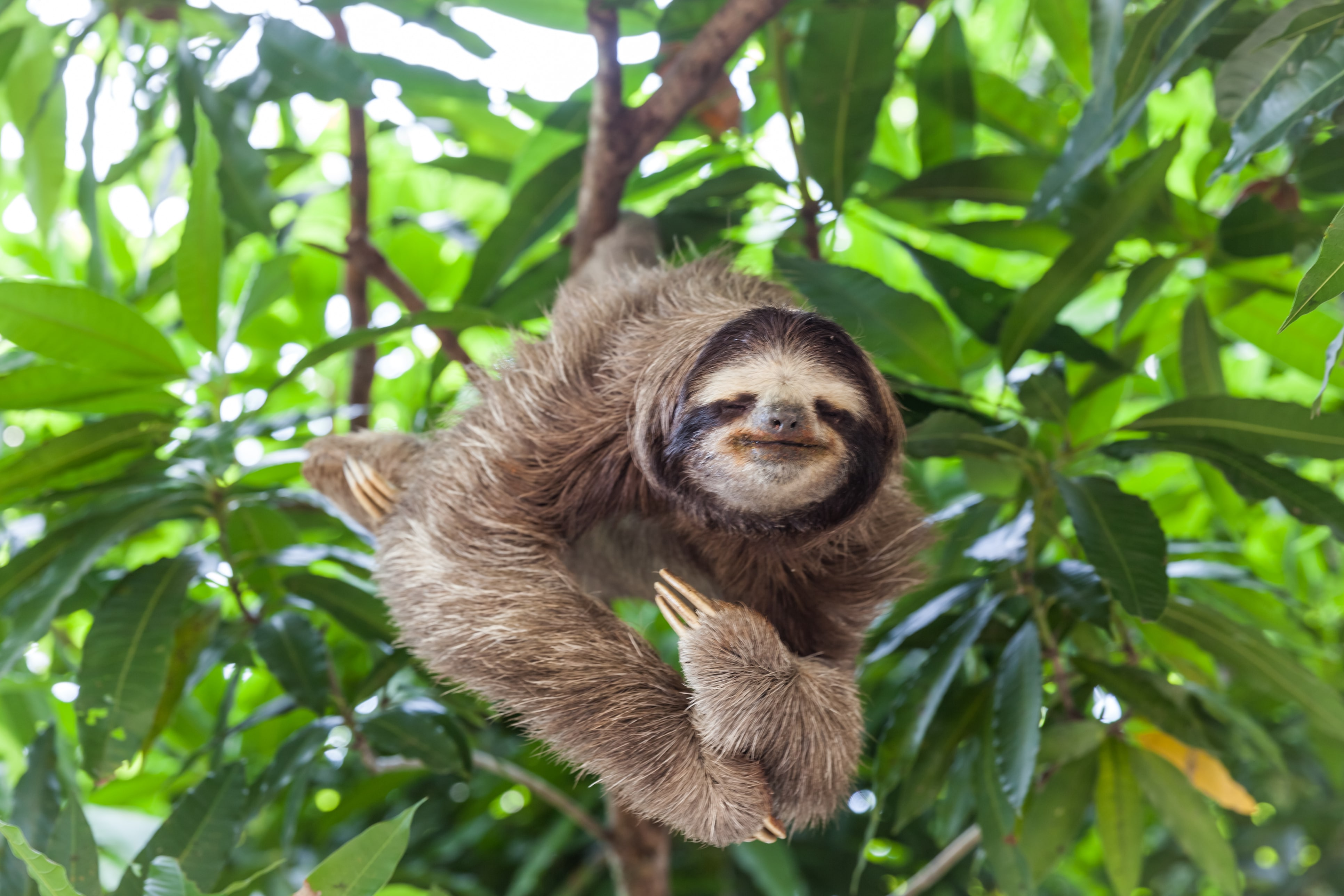 Is It Legal To Own A Pet Sloth In Texas Lorenz Lorenz L L P